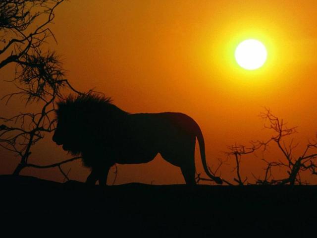 Лев (Леон): значение имени, характер и судьба, происхождение и толкование, совместимость в любви