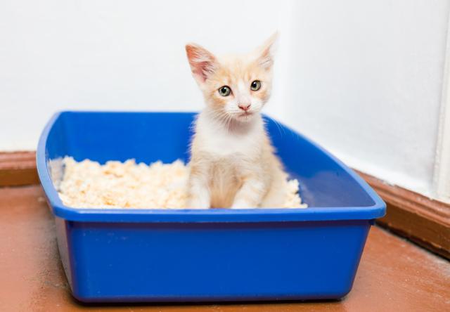 Кот нагадил на кровать: примета, почему, на вещи