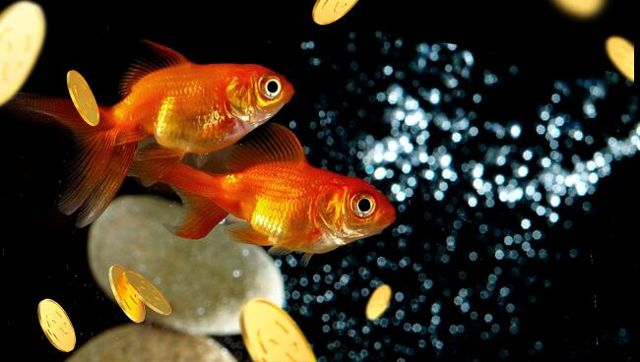 Убить рыбу во сне: для женщины и мужчины, толкование по сонникам