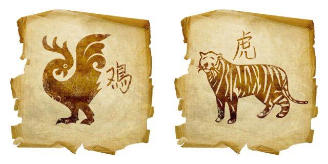 Петух и Тигр: совместимость в любви и браке по гороскопу