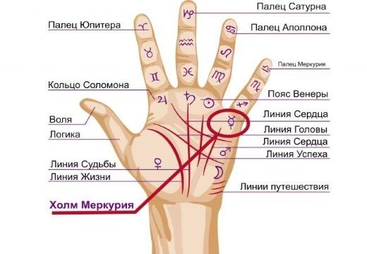 Холм Меркурия на руке: линии, знаки, хиромантия