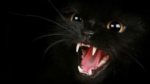 Черная кошка во сне по соннику: к чему видеть, много, с котятами, нападает, ласкается, кусает, для женщины и мужчины