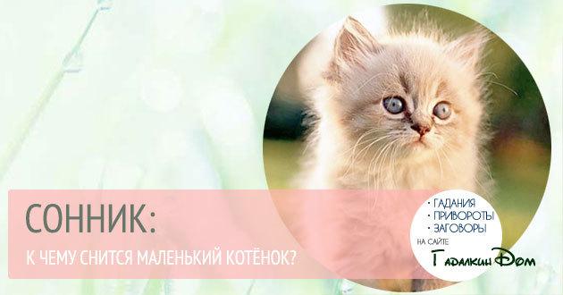 Видеть во сне котят: маленьких, много, с кошкой, толкование для мужчины и женщины