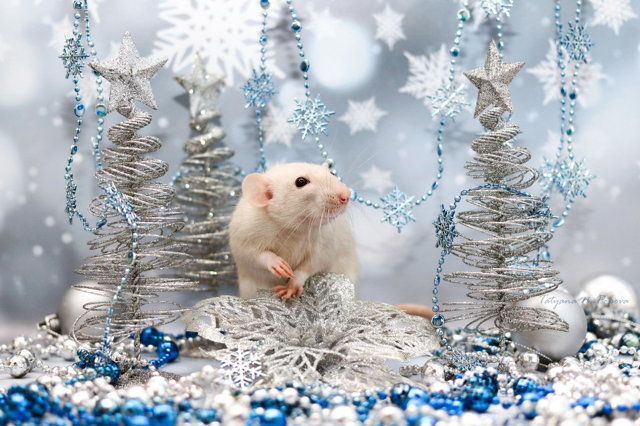 Как встречать Новый 2020 год Крысы: приметы, как встречать, можно ли одной, что сделать перед праздником