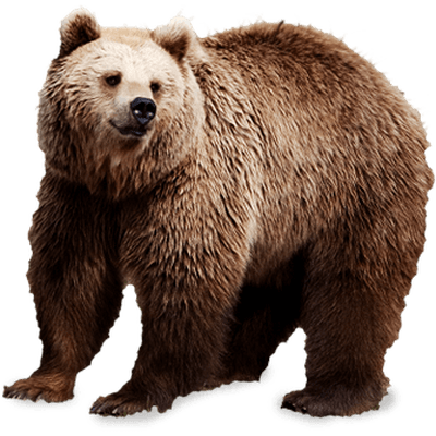 Клык медведя: значение символа, оберег, описание