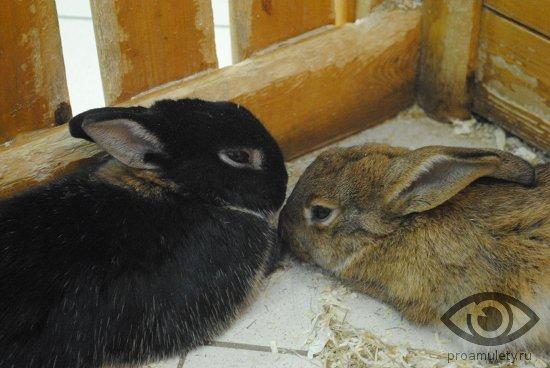 Кролик (Кот) и Дракон: совместимость по гороскопу