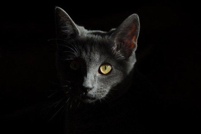 К чему умирает кот (кошка) в доме: приметы, почему