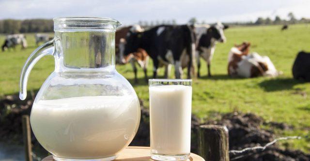 Заговор на молоко: вылечить кота, чтобы покупали козье, лилось рекой из груди
