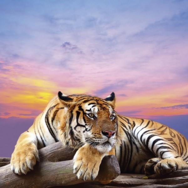 Тигр и Обезьяна: совместимость в любви и браке по гороскопу
