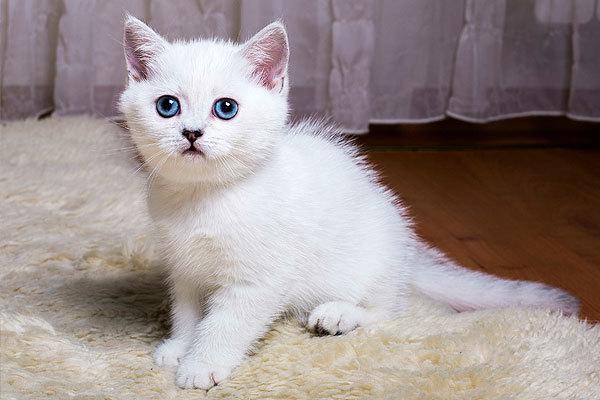 Черный кот (кошка) в доме: приметы и суеверия, пришел в дом, квартиру