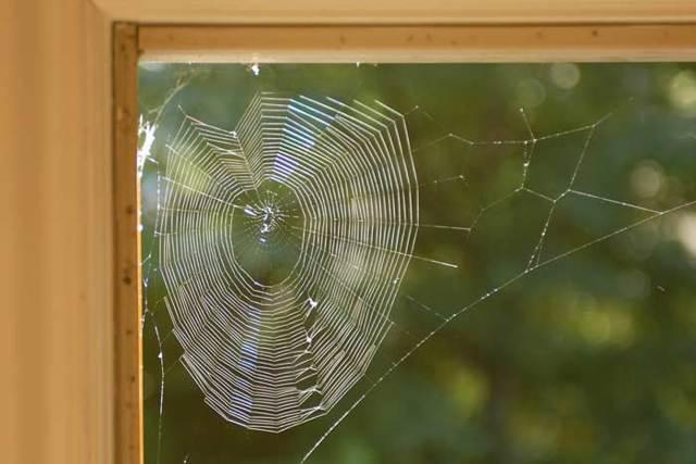 Паук в доме: к чему, увидеть дома, приметы
