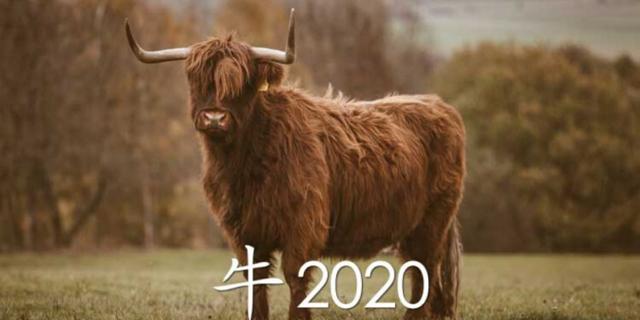 Гороскоп на 2020 год по году рождения для мужчины-Быка (Буйвола): что ждет в любви и отношениях, деньгах и карьере, прогноз от Глоба и Володиной