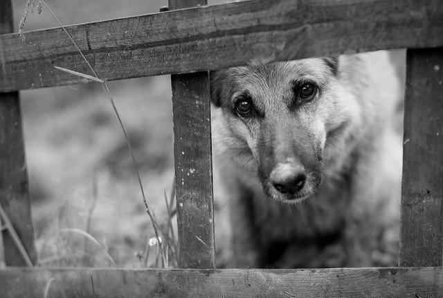 Чужая собака прибилась к дому: примета, к чему, забежала