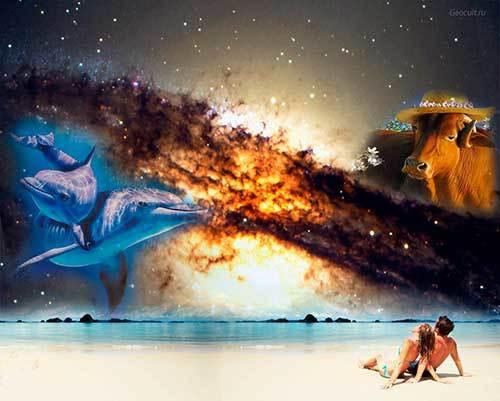 Рыбы и Телец: совместимость в любви и браке по гороскопу