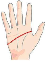 Обезьянья складка на ладони: что значит, линия симиан, четырехпальцевая