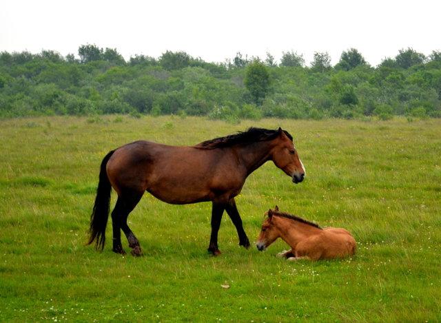 Чертог Коня: описание оберега, значение, перстень