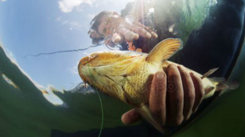 Держать рыбу в руках во сне: гладить, собирать, брать, трогать, толкование для женщины и мужчины