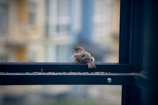 Птица ударилась в окно и улетела: примета, к чему