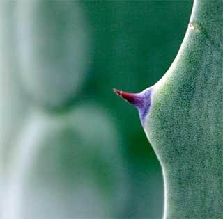 Чешется грудь: народные приметы, к чему