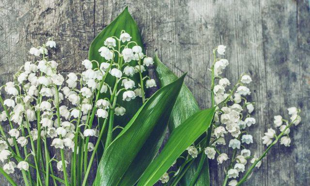 Желтые тюльпаны: к чему дарят, приметы