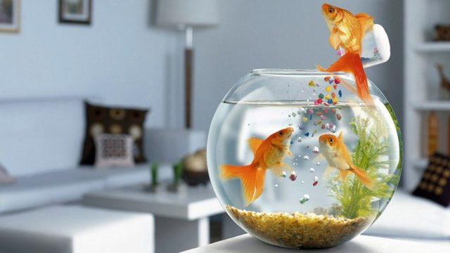 Жарить рыбу во сне или видеть жареную: к чему снится, для женщины и мужчины