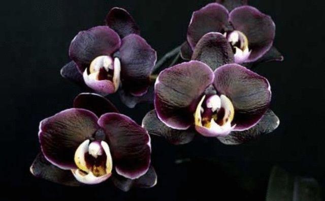 Орхидея: приметы и суеверия, можно ли держать дома