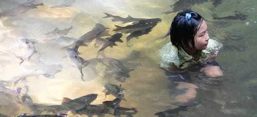 Сон о рыбах в воде: видеть, плавать с ними, в море, реке, аквариуме, кататься