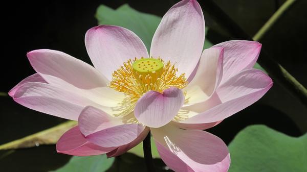 Заговоры, чтобы в доме росли цветы: продавались, комнатные, при купании