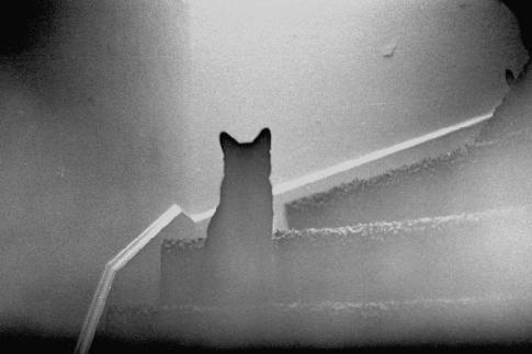 Мальчик с котенком на руках оказался призраком