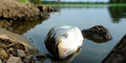 Мертвая (дохлая) рыба во сне: видеть в воде, реке, море, аквариуме, много