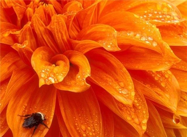Оранжевая аура: что означает для человека, влияние на здоровье и характер, сочетание с другими оттенками, особенности в зависимости от места на теле