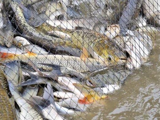 Видеть во сне много рыбы: толкование для женщины и мужчины, в воде, мелкой, крупной, пойманной, плавающей