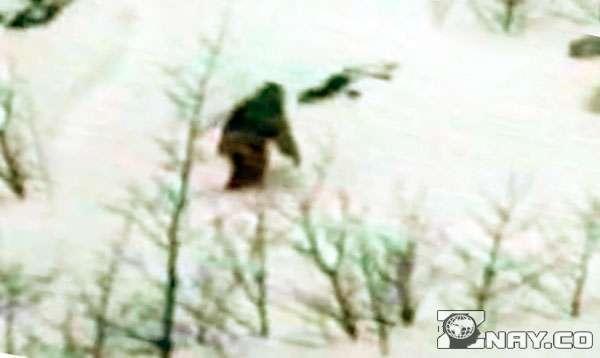 Снежный человек (йети): бигфут, как выглядит, что такое