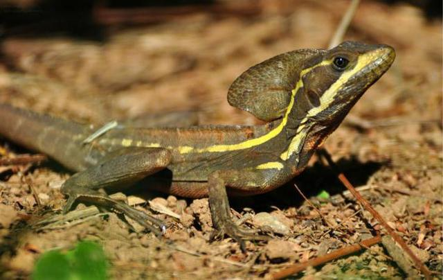 Василиск (мифология): кто это, змей, как выглядит